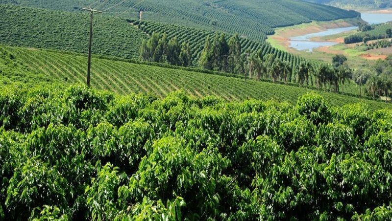 Valor Bruto da Produção (VBP) agropecuária mineira é estimado em R$ 91 bi para 2020