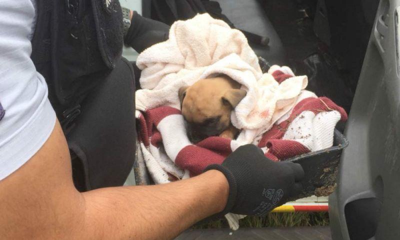 Homens enterram cão vivo, são presos por maus-tratos e soltos em seguida no DF