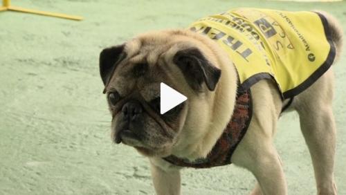 Academia abre espaço para pets treinarem com os donos