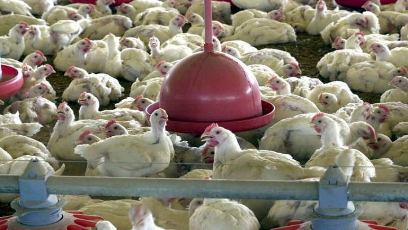 Brasil quer acionar OMC para analisar barreiras da UE ao frango