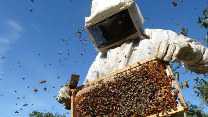 Agrotóxicos encurtam vida e mudam comportamento das abelhas