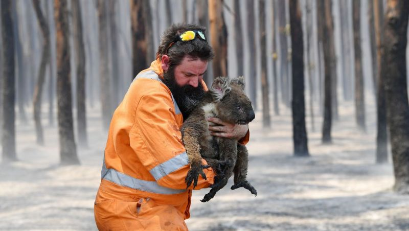 Incêndio na Austrália destruiu um terço da ilha Kangaroo, mostra Nasa