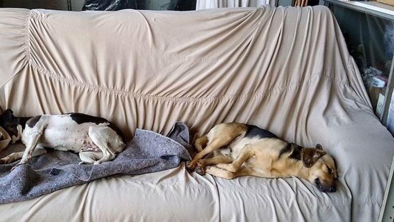 Comerciante coloca sofá na loja para abrigar cães abandonados