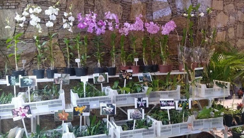 Feira reúne exposição de orquídeas em Juiz de Fora e conta com ação social