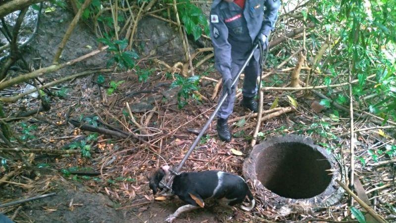 Cão é resgatado de fosso por bombeiros em Barbacena
