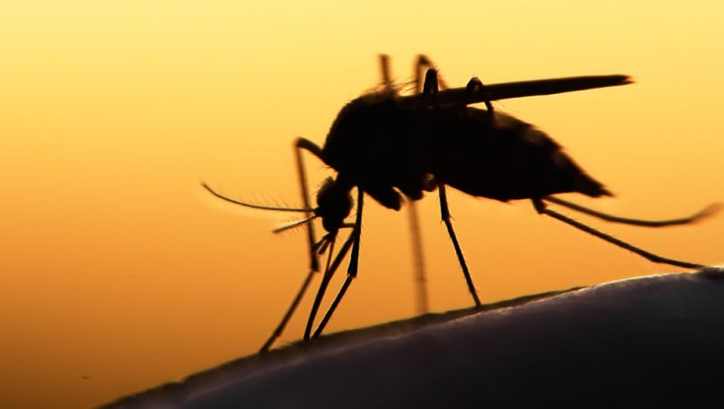Número de mortes por febre amarela no país sobe para 154