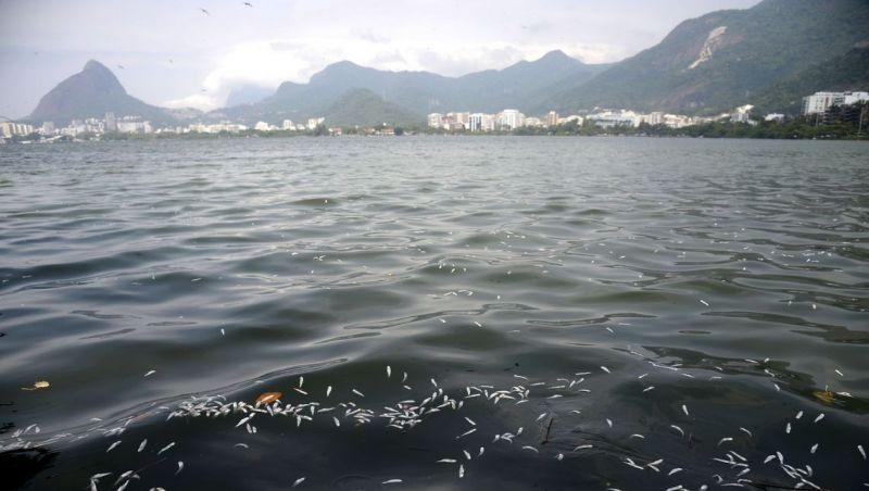 Rio: mais de 55 toneladas de peixes mortos foram recolhidas da Lagoa