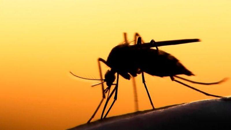 Pesquisa identifica composto com potencial para tratamento da malária