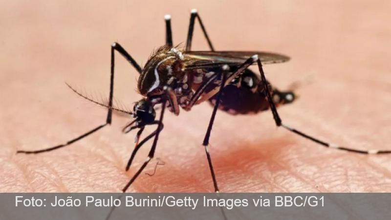Cidades da Zona da Mata e Vertentes registram 920 casos prováveis de dengue