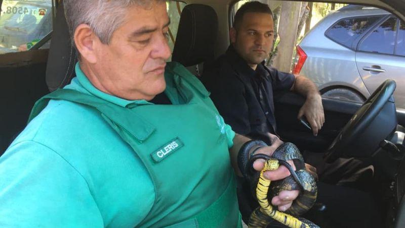 Cobra de 2 metros provoca pânico e fecha restaurante em SP