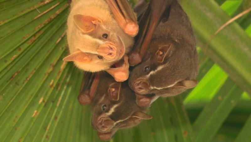 Laboratório da Unicamp estuda 'irmão' do coronavírus que é comum em morcegos no Brasil