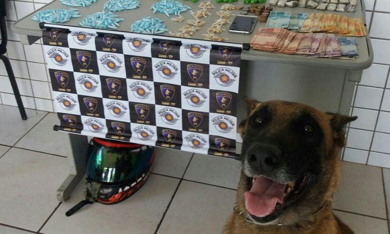 Pela 2ª vez, policiais registram cão que posa para foto e sorri em apreensão de drogas