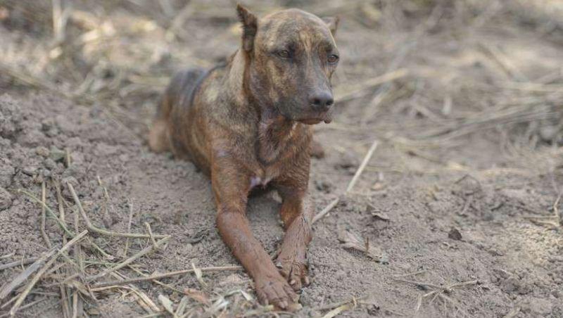 Conheça Vitinho, o cão de Brumadinho que comoveu a internet ao fazer vigília pelos donos