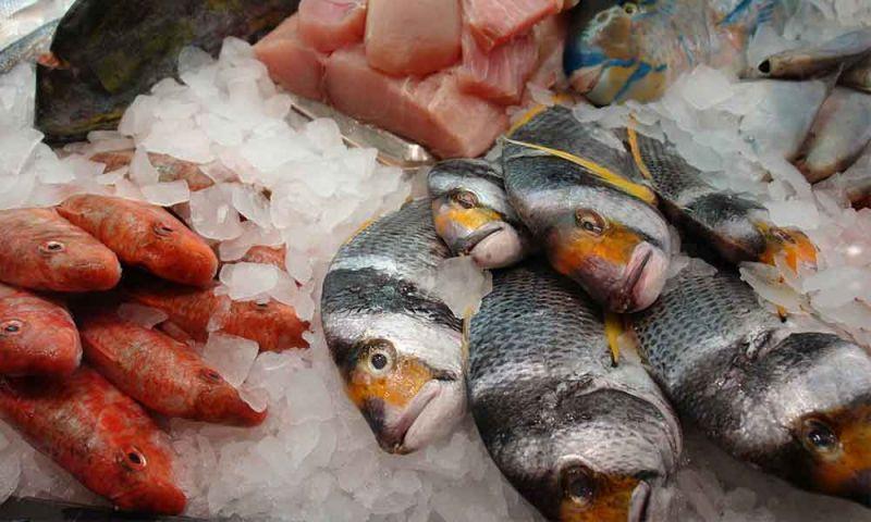 6 tipos de peixe que não devemos comer