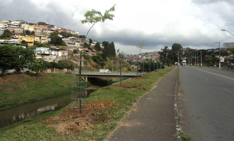 Margens do Rio Paraibuna em Juiz de Fora recebem 40 novas mudas de árvores