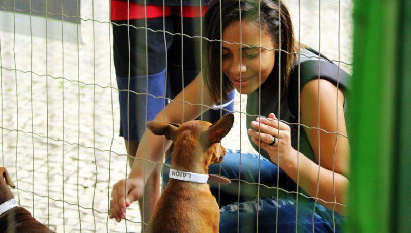 Evento de adoção do Canil Municipal de Juiz de Fora termina com 12 animais adotados