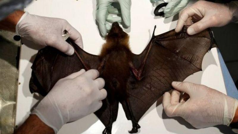 Doenças que passam de animais ao homem crescem sem proteção ao meio ambiente, diz ONU