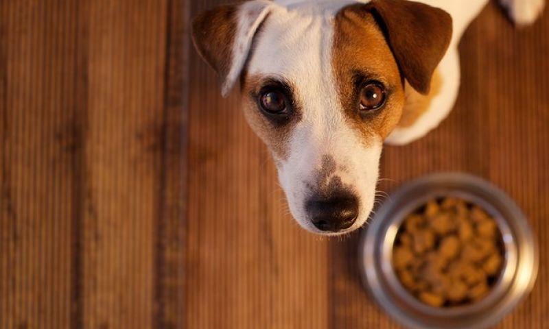 Cachorro vomitando ração? Saiba o porquê
