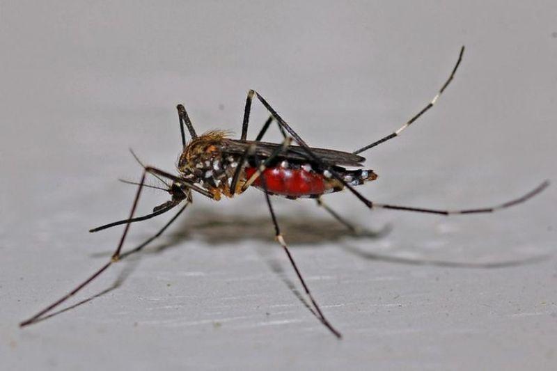 Número de mortes por dengue neste ano em MG já é 11 vezes maior em relação a 2018