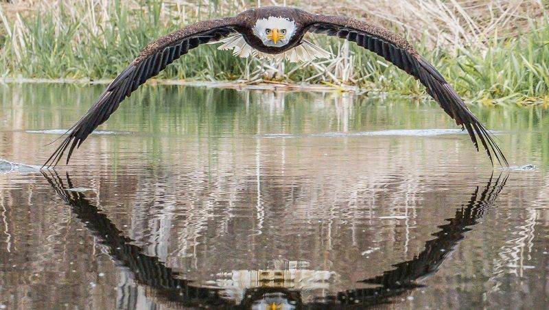 A incrível foto de águia que viralizou e surpreendeu fotógrafo amador: 'Senti a brisa das asas'