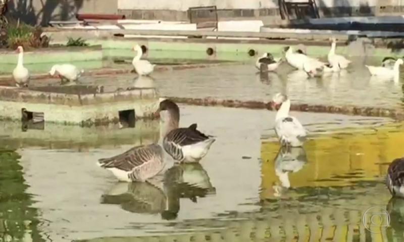 Parque do Anhembi esvazia espelho d'água e peixes vão 'para a panela'