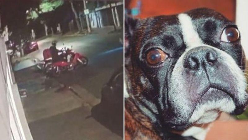 Cachorro furtado por suposto entregador de comida é devolvido à família