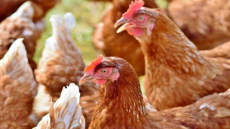 O frigorífico que produz carne de frango sem matar nenhuma ave