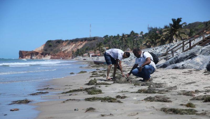 Manchas de óleo voltam a aparecer no litoral do Ceará
