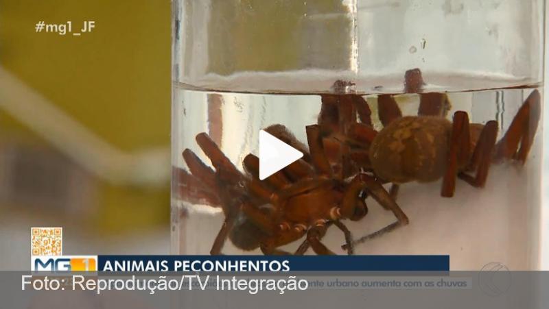Temporada de chuva aumenta número de animais peçonhentos na zona urbana de Juiz de Fora