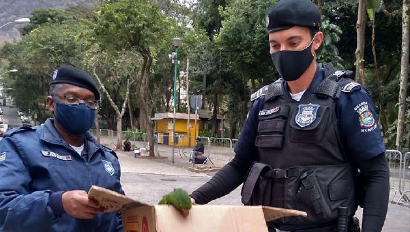 Guarda Municipal de Juiz de Fora socorre criança no Calçadão e recolhe ave no Parque Halfeld