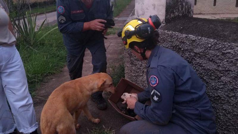 Bombeiros resgatam ninhada de cães em Barbacena após cadela cavar buraco pra proteger as crias