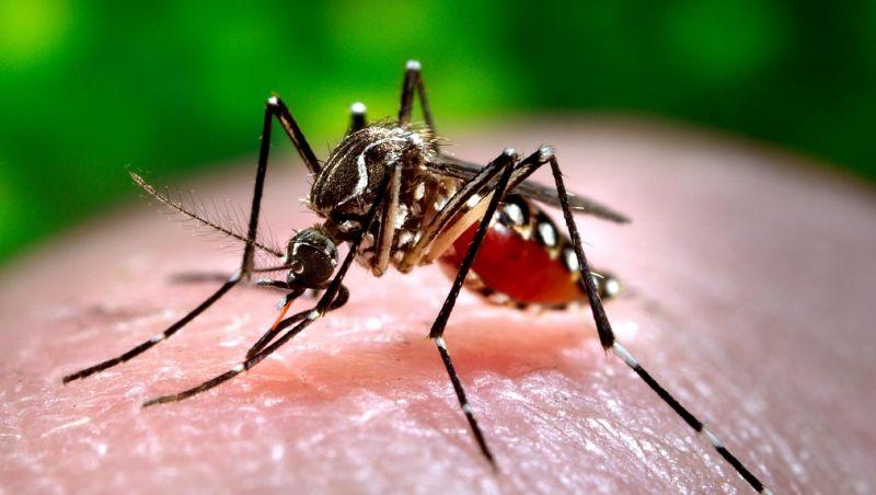 Especialistas alertam para epidemias de Zika e Chikungunya no verão