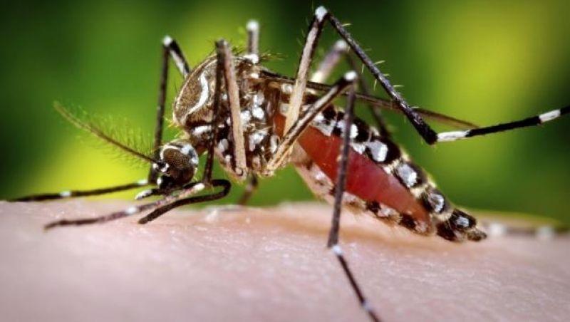 Casos prováveis de dengue em Minas quase triplicam em uma semana