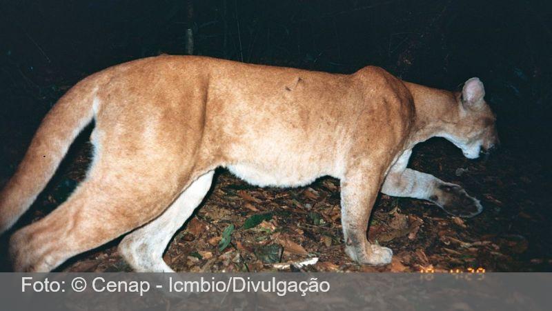 IBGE: Brasil tem 3.299 espécies de animais e plantas ameaçadas