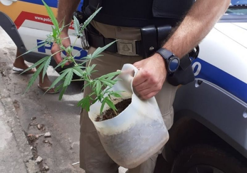 Homem é preso após cultivar pé de maconha dentro de casa em Muriaé