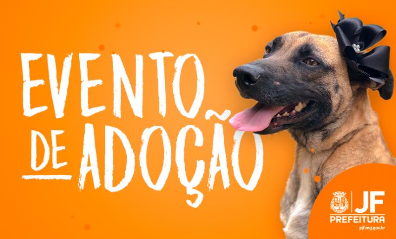 Demlurb realiza evento de adoção de cães neste sábado em Juiz de Fora