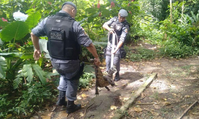 Jacaré é resgatado pela polícia após ser encontrado por moradores na Zona Leste de Manaus