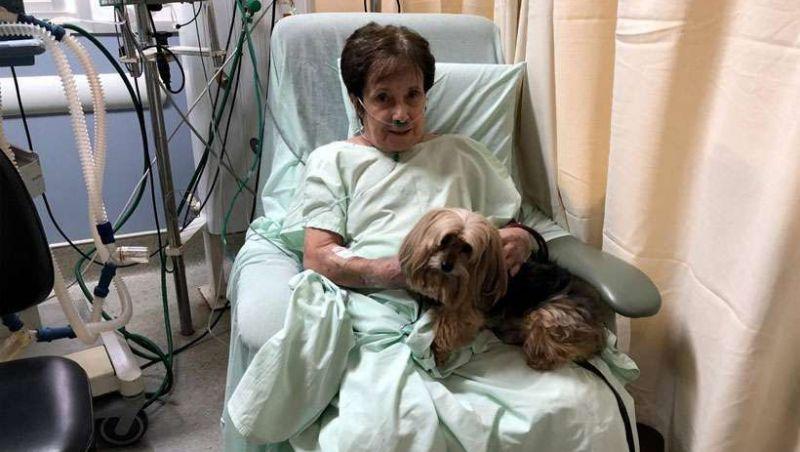 Cão que ajudou a salvar idosa que sofreu queda acompanha a paciente na UTI
