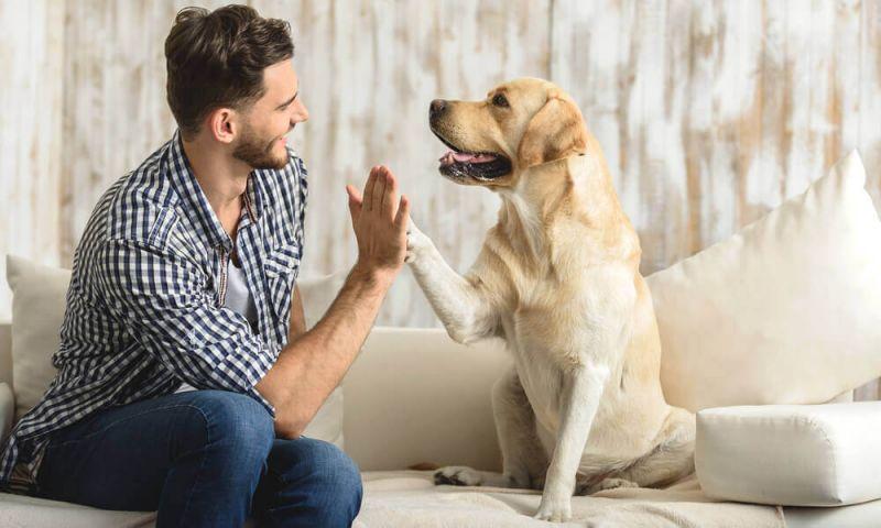 Benefícios de ter um animal de estimação em casa