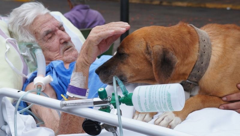 Maca é posta na rua para cão visitar idoso que chora internado