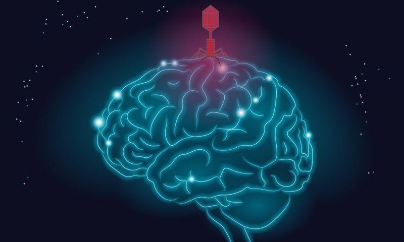 Infecções por vírus estão associadas à doença de Alzheimer, diz estudo