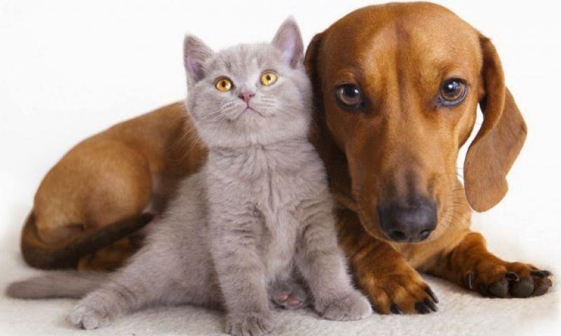 Quais são as vantagens e desvantagens de castrar o cachorro?