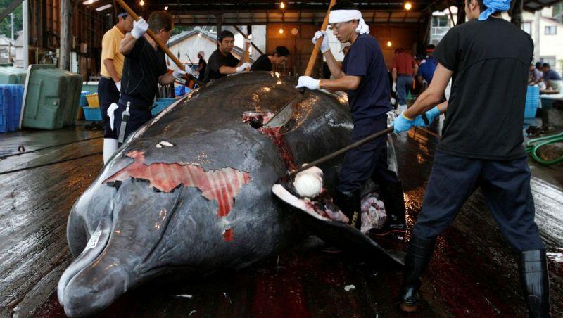 Retomada à caça de baleias no Japão é retrocesso, diz Brasil
