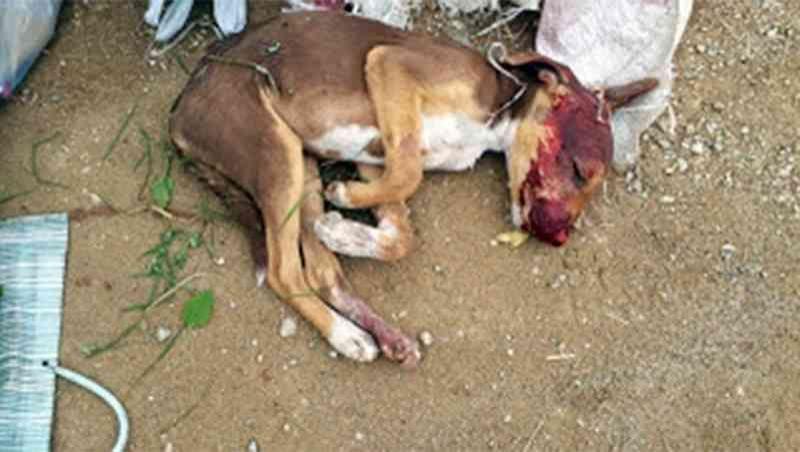 Homem é preso por espancar até a morte três filhotes de cachorro em MG