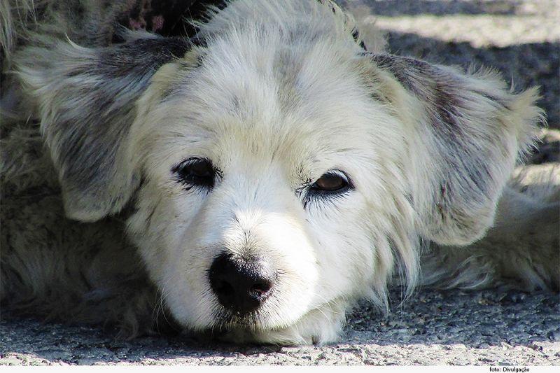 Dono de cães deve ser indenizado por envenenamento de animais