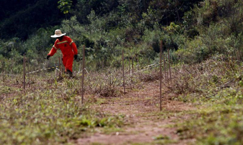 Mariana: estudos mostram caminhos para recuperar solo com rejeitos