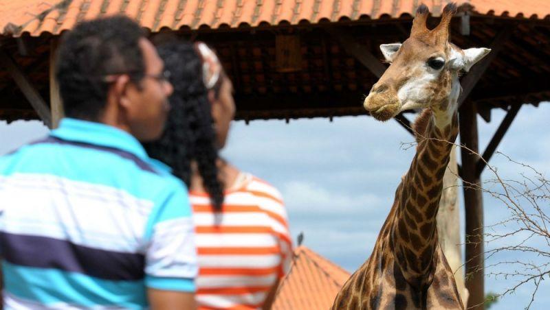 Girafa de 7 anos morre no Zoológico de Brasília