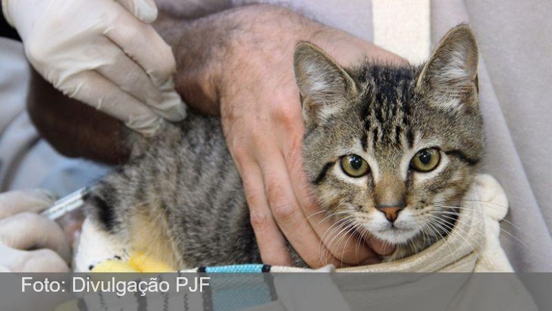 JF: Campanha de vacinação antirrábica animal acontece neste sábado, 23