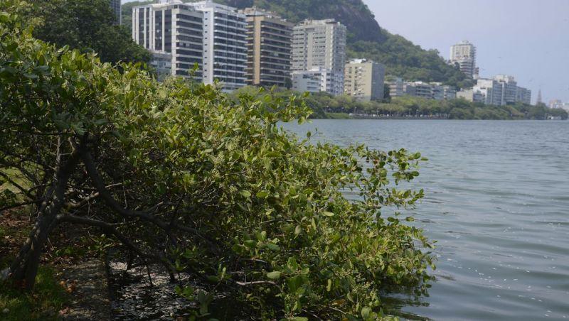 Rio conclui retirada de peixes mortos da Lagoa Rodrigo de Freitas