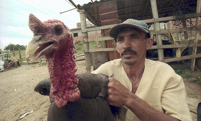 Agricultor vira amigo de peru e muda o cardápio da ceia de Natal